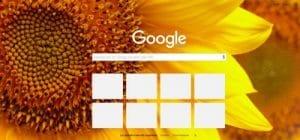 Google chrome avec tournesols