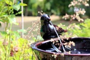 Notre jolie fontaine oiseau