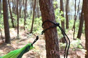 Cordes hamac attachées à un arbre