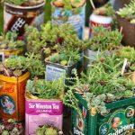 De vielles boites à thé comme pots plantes grasses