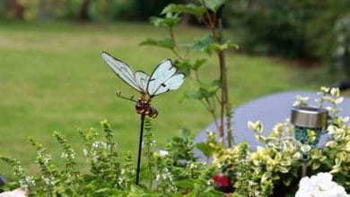 Joli papillon solaire à piquer dans un parterre