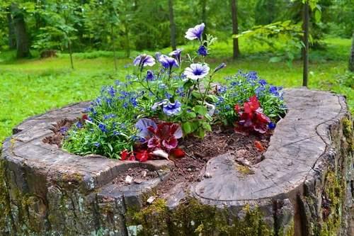 Souche d'arbre transformée en jardinière pour les fleurs