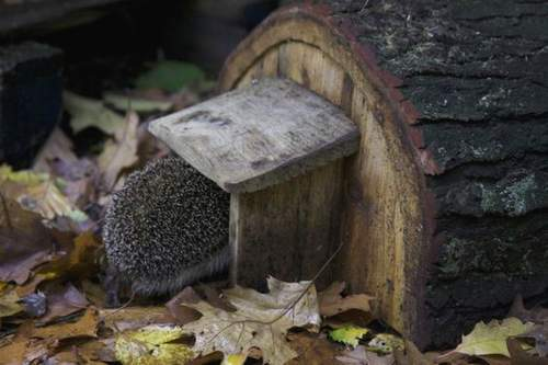 Abri hérisson dans une souche d'arbre