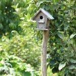 Un nichoir pour oiseaux en bois