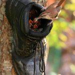 Nids pour oiseaux original en forme de chaussure