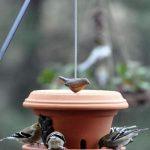 Mangeoire oiseau en pots