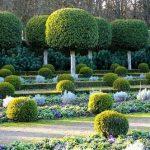 Topiaires : arbres et arbustes