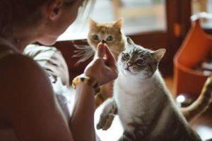 Deux chats attendant pour manger