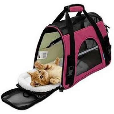 Transporter un chaton en toute sécurité