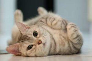 Ce chat semble très sociable : bien le choisir