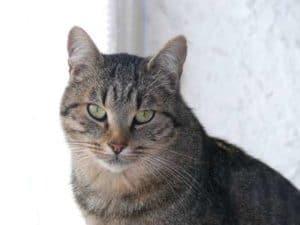 Quel chat choisir, bien adopter avec un test de caractère