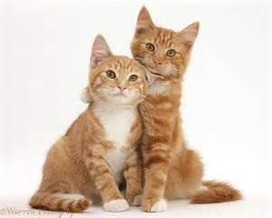 Bien connaître les chats