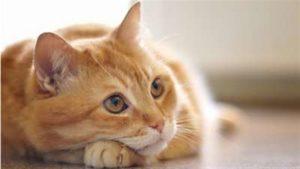 Les chats aiment les contacts des humains
