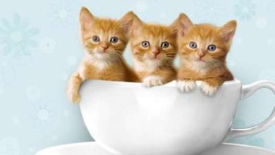 Adopter un chaton