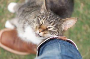 Joli chat qui se frotte pour laisser son odeur
