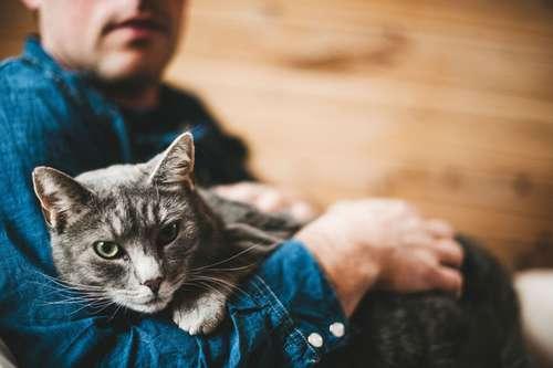 chat et homme