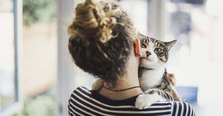Test de caractère chat pour bien le choisir