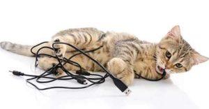 Chaton qui s'amuse à mordre un fil électrique