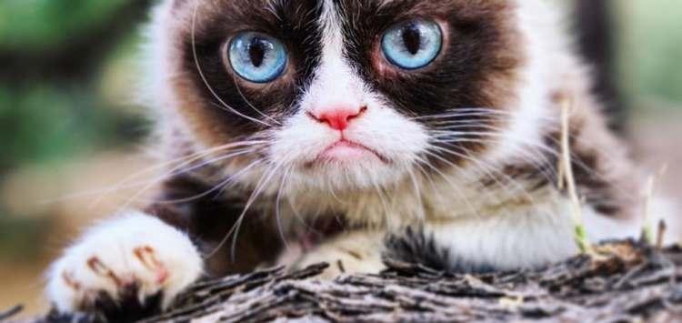 Comprendre le comportement du chat sur son territoire