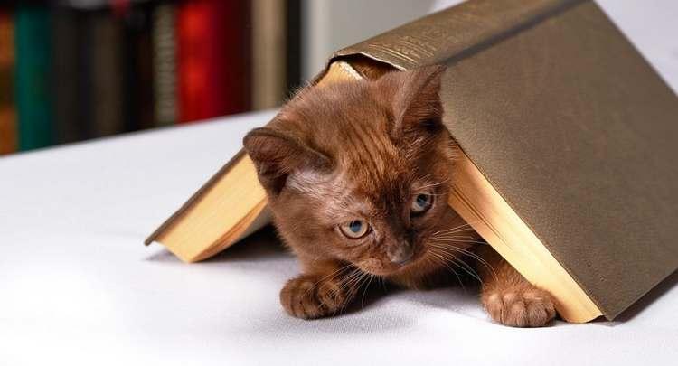 Quelle éducation pour un chaton ?