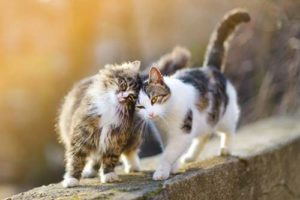 Deux chats sur le même territoire