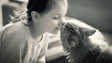 Les chats et l'humain