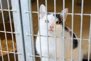 jeune chat attendant un maître dans un refuge