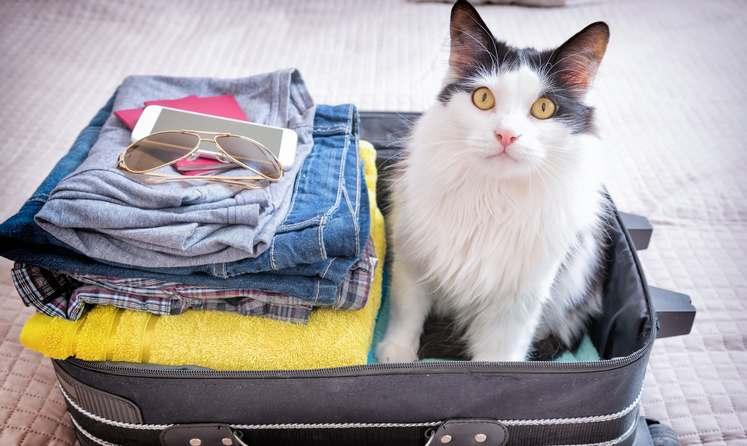 Comment faire avec son chat pendant les vacances