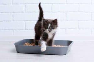 chaton qui apprend à se servir de sa litière