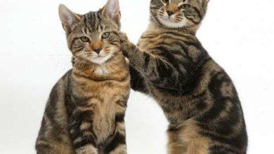 chatons qui aiment jouer ensemble