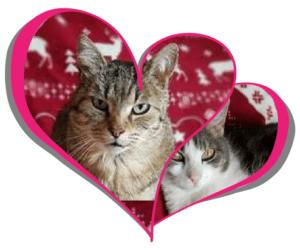 Les chats de Miss Futée