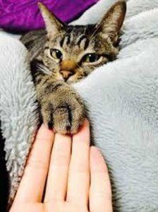 Chat qui fait la sieste avec son maître