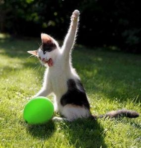 chaton qui s'amuse avec une balle