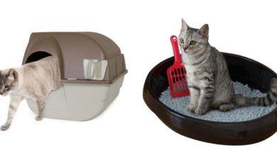 Photo de Bien choisir un bac à litière ou une maison de toilette pour son chat