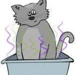 Comment supprimer les odeurs de la litière du chat