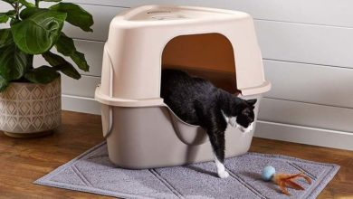 Comment trouver un emplacement idéal pour la litière de son chat ?