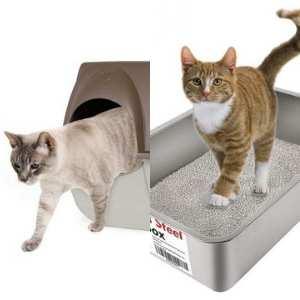 Bien choisir le bac à litière ouvert ou fermé de son chat