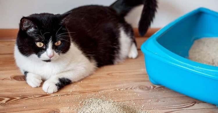Comment régler le problème du chat malpropre