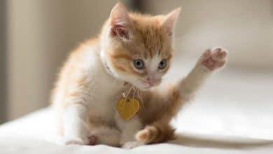 Photo de Accueillir un chaton : bien préparer son coin