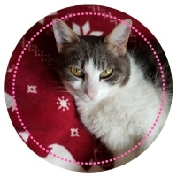 Noisette, un des chats de Miss Futée