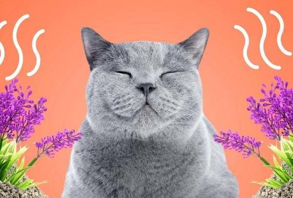 Solutions pour lutter contre les mauvaises odeurs de litière de son chat