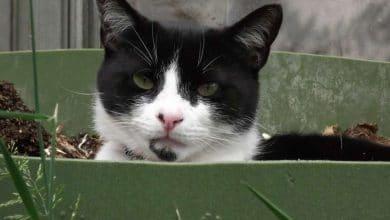 Photo de Composter la litière de son chat : comment faire ?