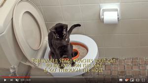 Voici comment dresser son chat à utiliser les toilettes grâce au kit Liter Kwitter