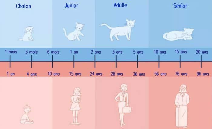 Tableau équivalence âge chat et homme
