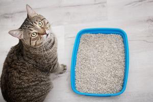 Attention de garder une litière propre en cas de marquage du territoire