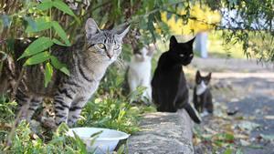 Plusieurs chats qui vivent ensemble peuvent marquer un même territoire